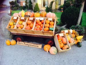 Brii Pumpkinfarm borden (6)