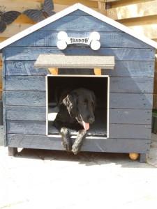 Naambord hondenhok (3)